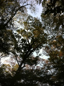 色づく前の木々