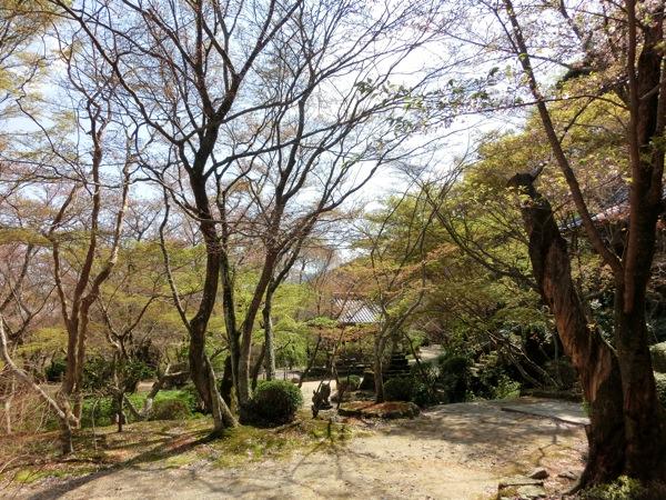 勝持寺の境内
