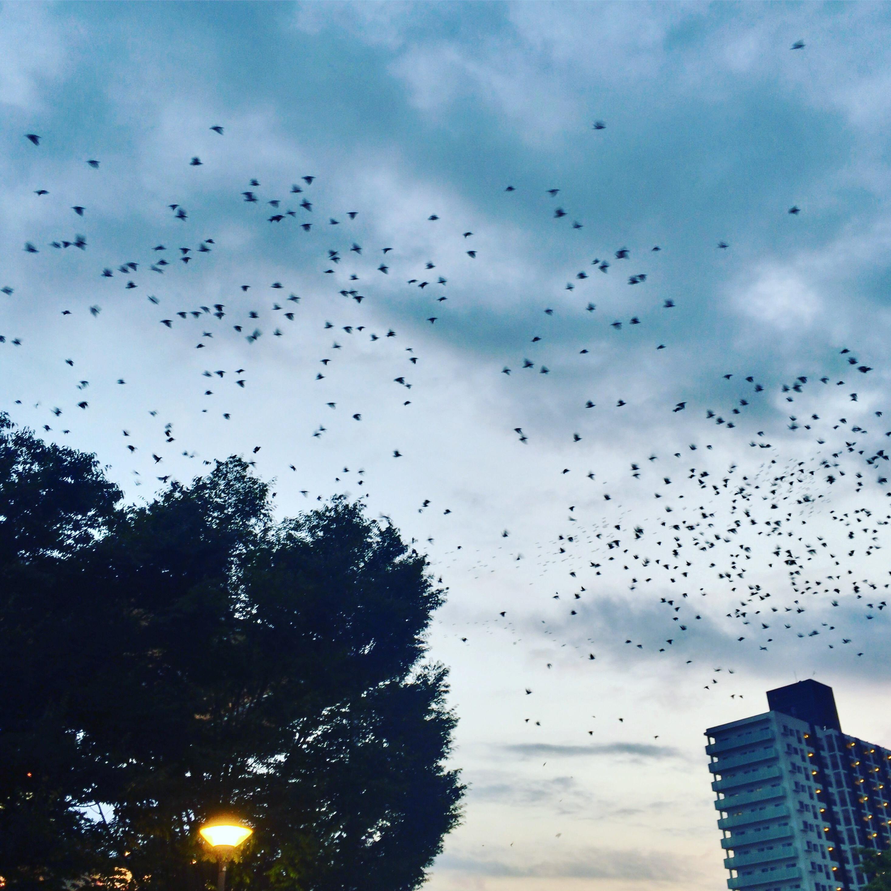 名鉄太田川駅近くで群れている鳥